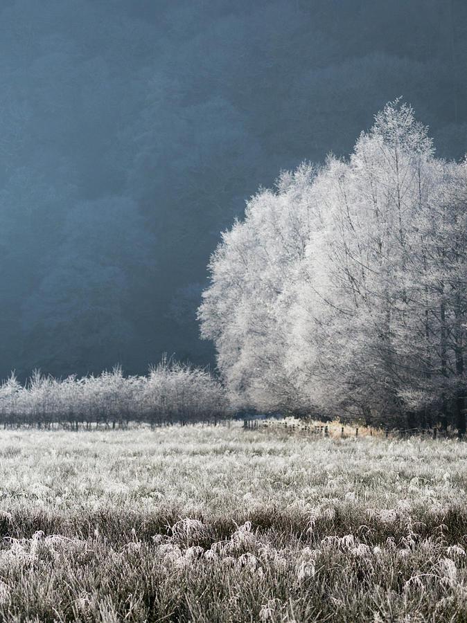 Frozen Forest Edge, Borrowdale by Anita Nicholson