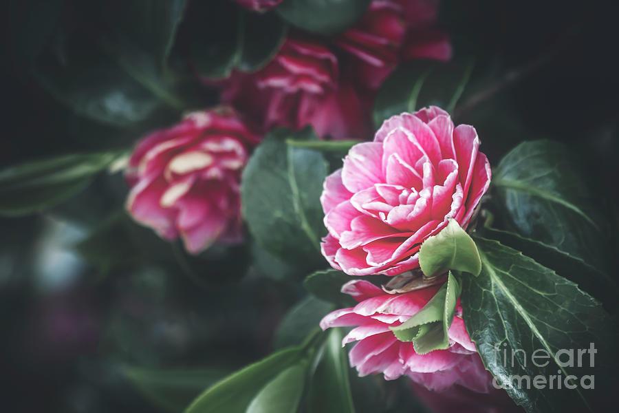 Full Bloom Photograph