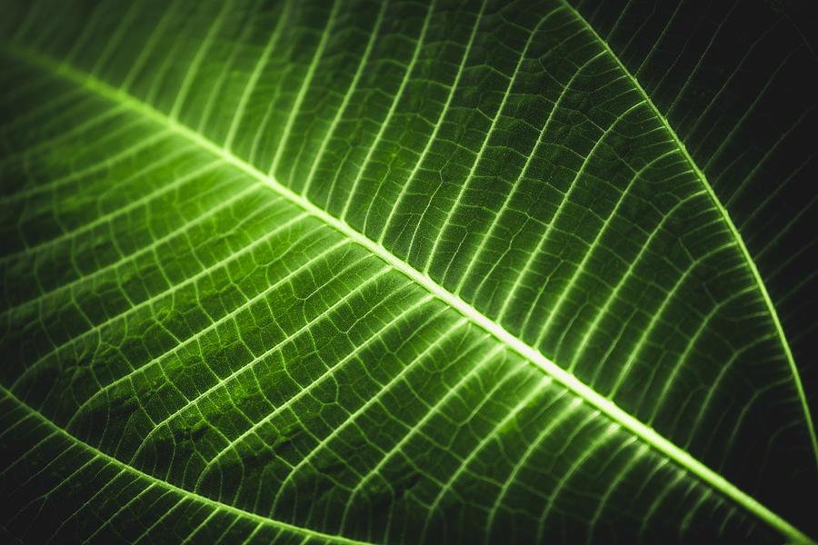Full Frame Shot Of Glowing Leaf Photograph by Sebastian Kopp / EyeEm
