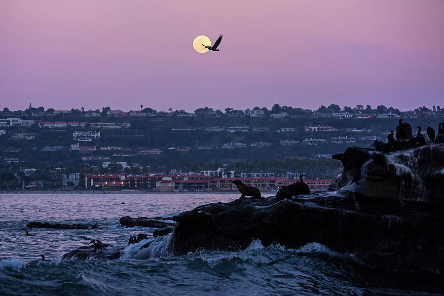 Full Moon Rising In Ellen Browning Scripps Park La Jolla Ca San Diego Pelican Fly By Photograph By Toby Mcguire