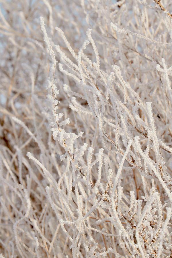 Full of Frost by Carol Groenen
