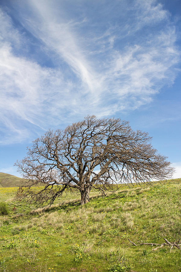 Full Tree by Harold Carlson