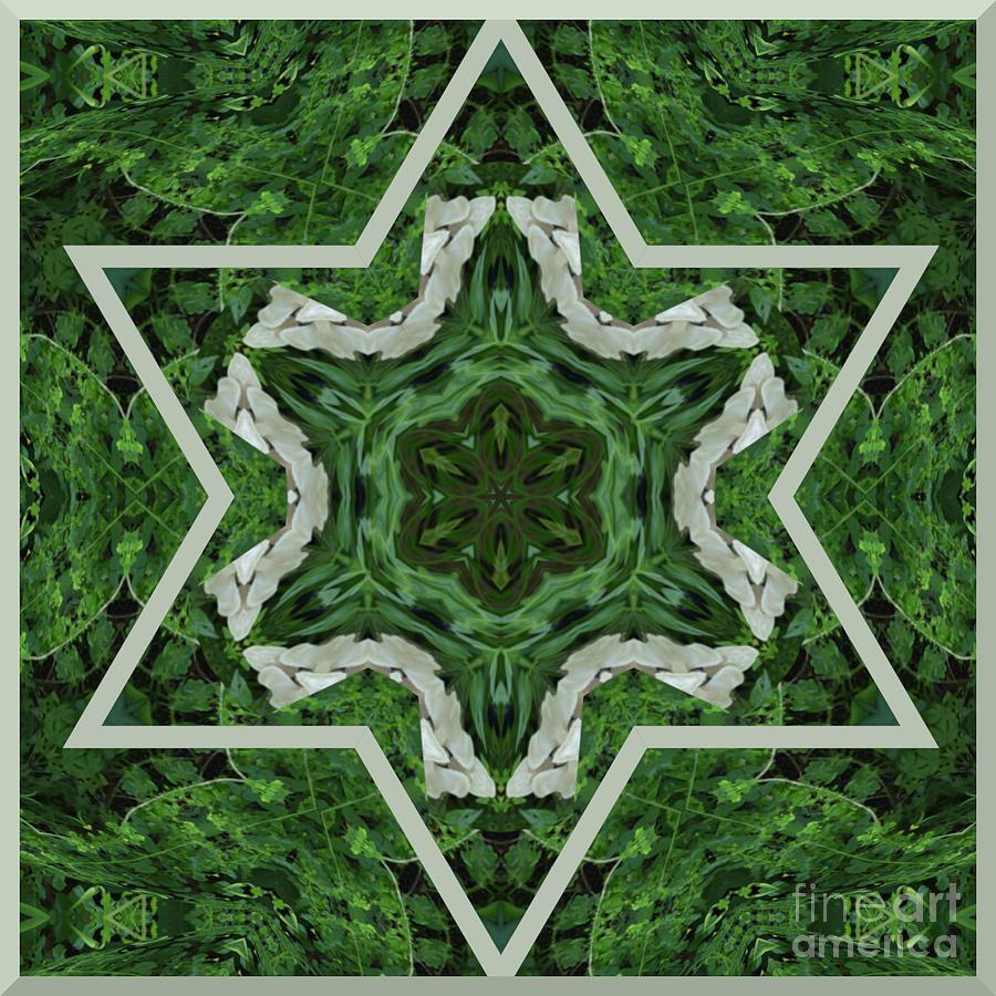 Fungal Star Kaleidoscope Digital Art