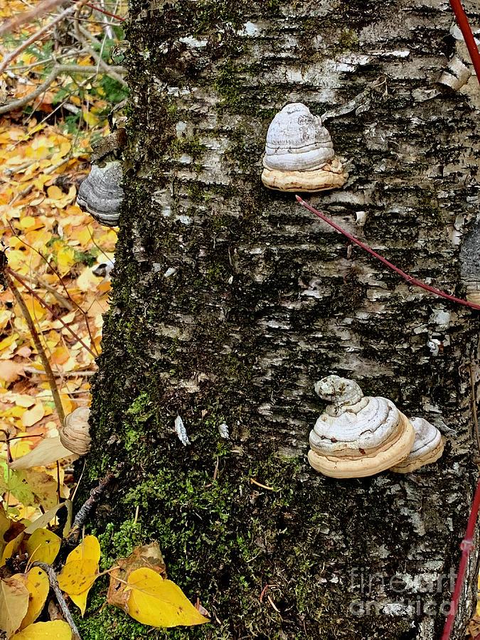 Fungi Photograph