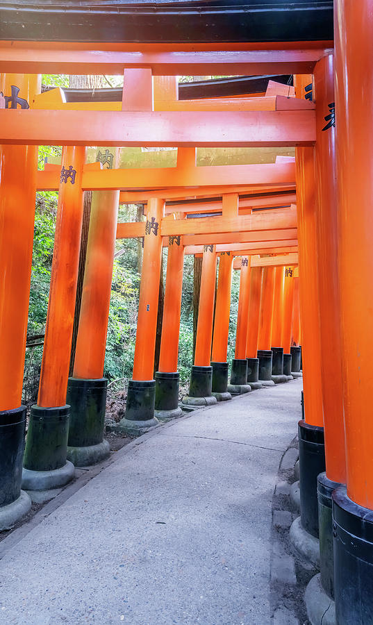 Fushimi Inari Shrine Kyoto Japan Photograph