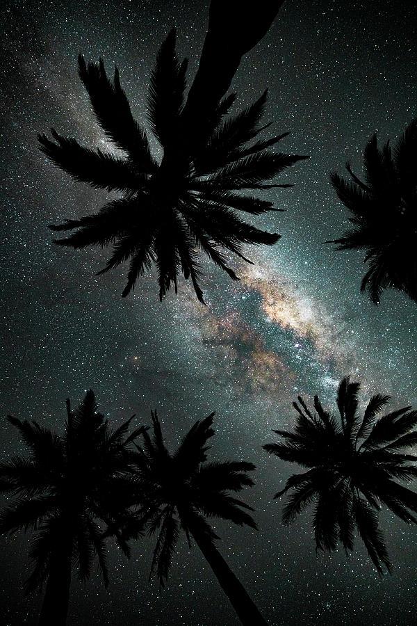 Chile Photograph - Galaxy Palms by Bryan Toro