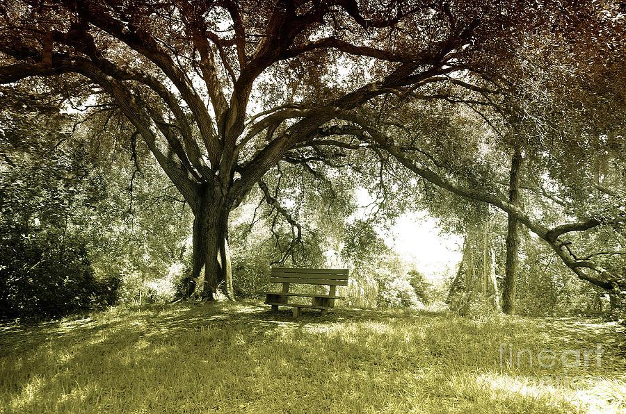 Bench Photograph - Garden Bench by Felix Lai