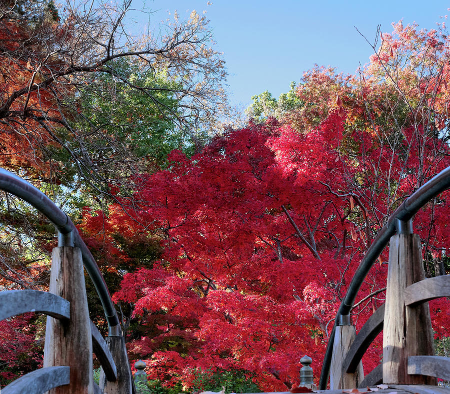 Garden Bridge Red Fall 2019 by Rospotte Photography