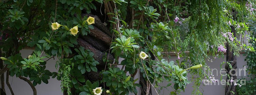Garden Panorama Photograph - Garden Panorama by Felix Lai