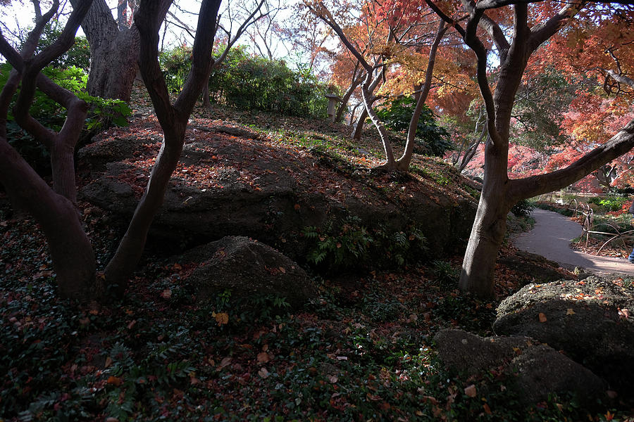 Garden Rockies by Ricardo J Ruiz de Porras