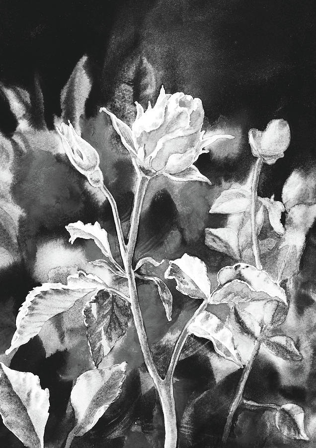 Garden Rose Flower Watercolor In Black And White Painting