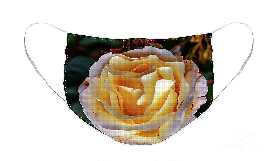 Garden Rose In Autumn.  Face Mask Photograph