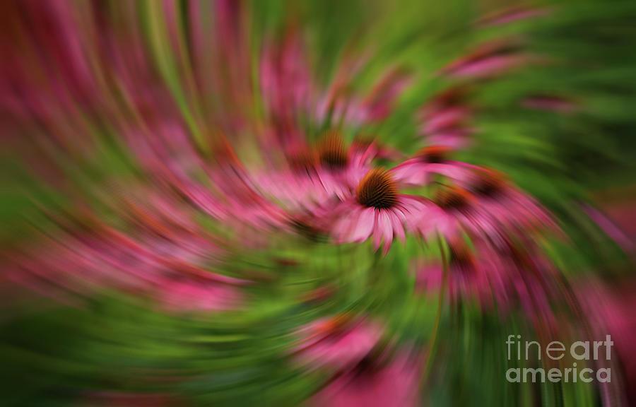 Garden Tempest Photograph