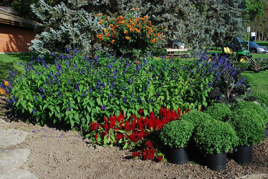 Gardening Order Photograph