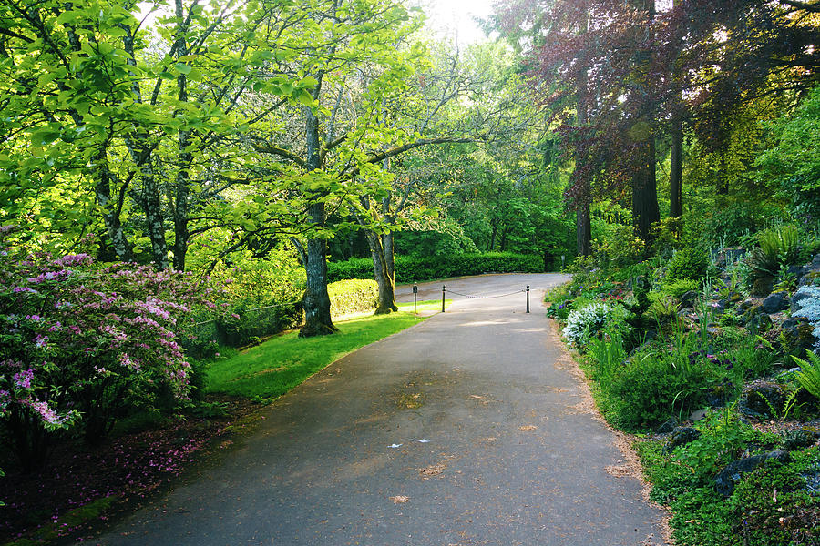 Gardens Along The Pittock Mansion Photograph