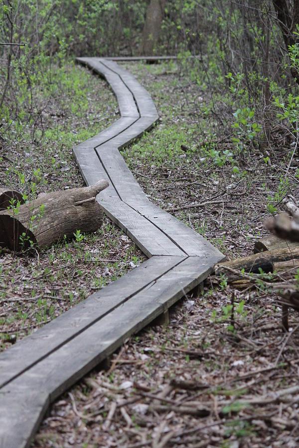 Uw Arboretum Photograph - Gardner Marsh Boardwalk by Callen Harty