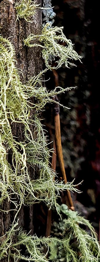 Gathering Moss Photograph