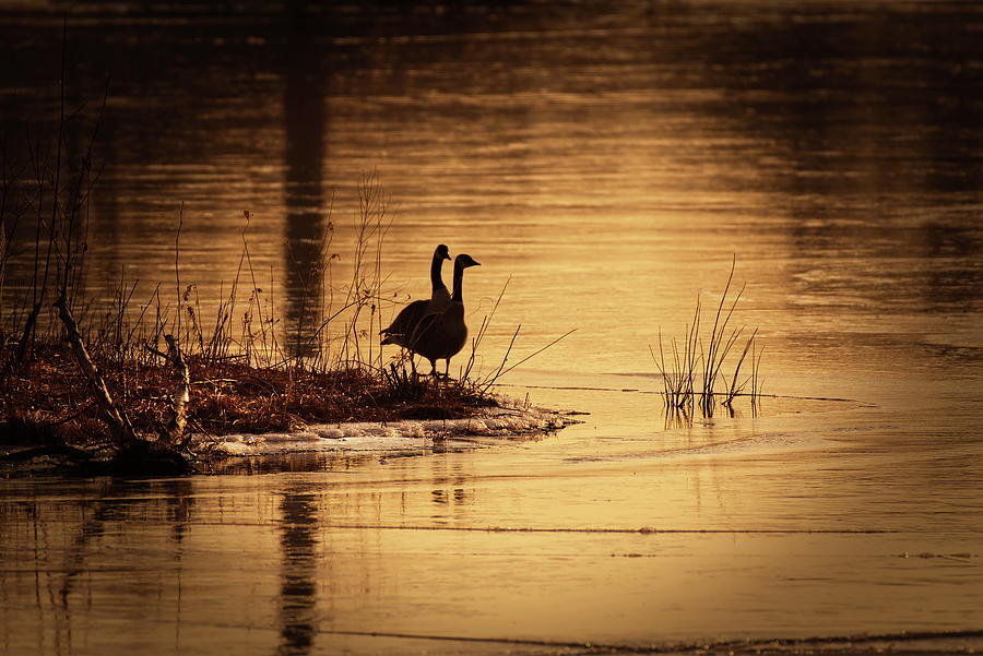 Geese At Sunrise Photograph