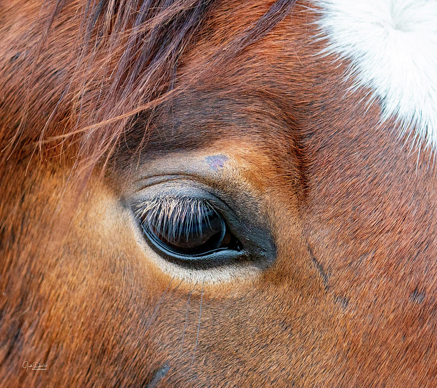 Gentle Horse Eye by Judi Dressler