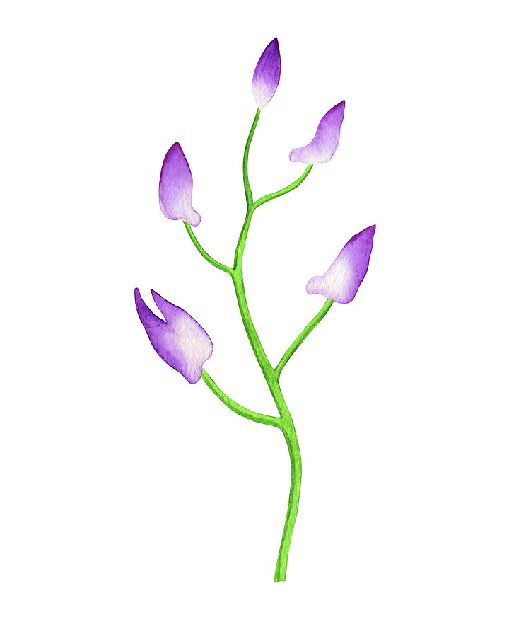 Gentle Purple Watercolor Orchid Flower Buds Painting