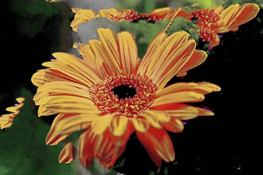 Gerbera Daisy Orangey Yellow Floating Like Lucy In The Sky #3 Photograph by David Frederick