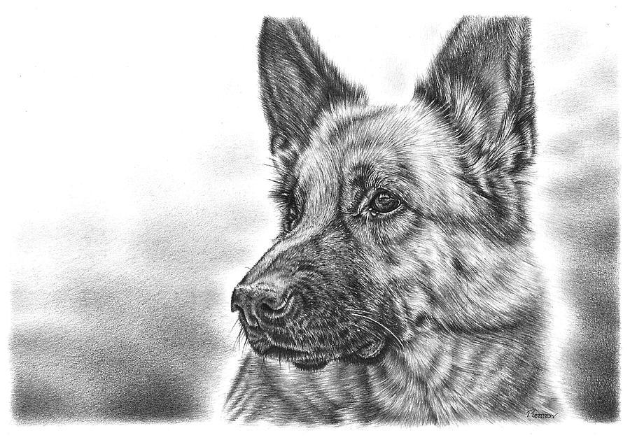 German Shepherd Drawing By Remrov
