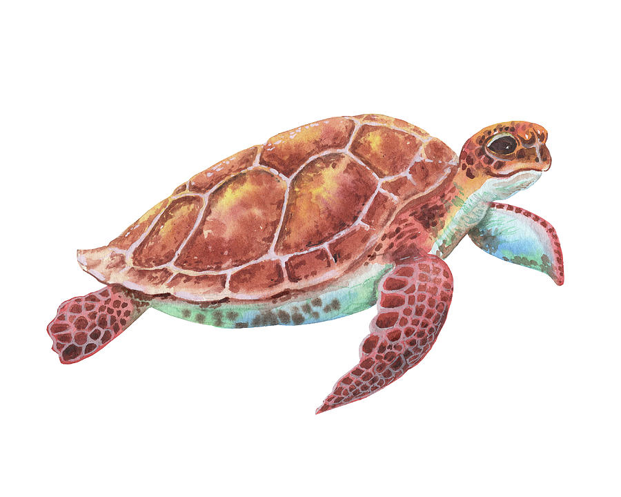 Giant Baby Sea Turtle Watercolor Painting Painting