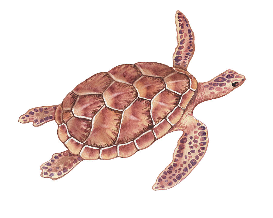 Giant Sea Turtle Watercolor Painting