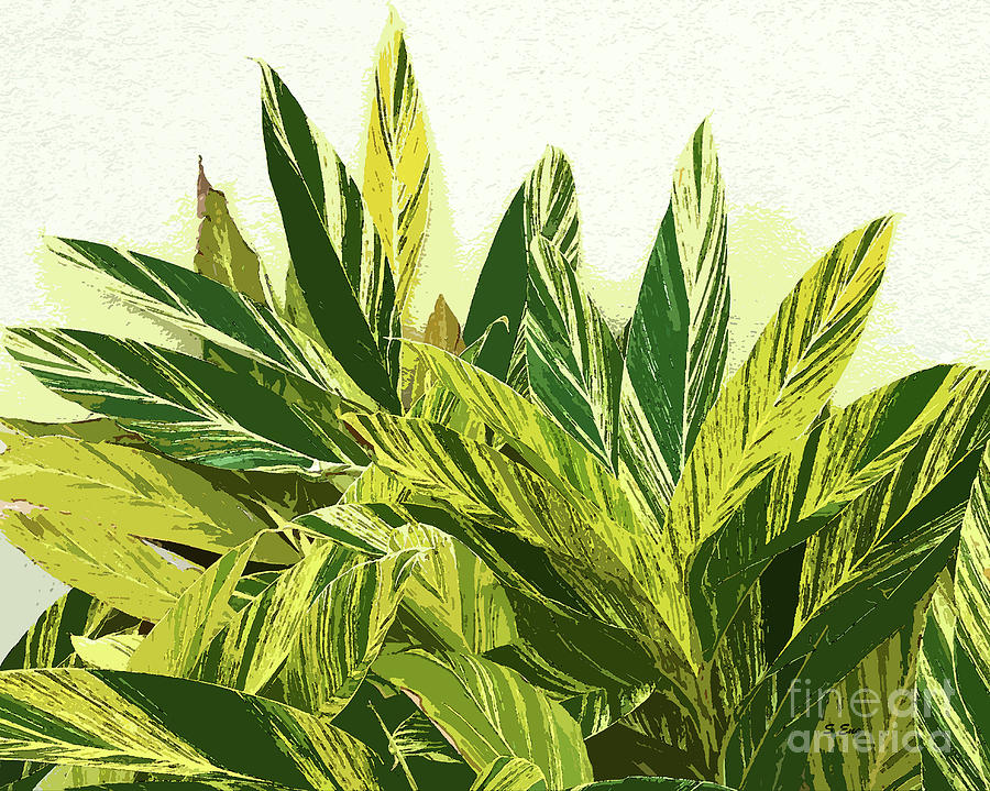 Ginger Variegation Abstract 300 by Sharon Williams Eng