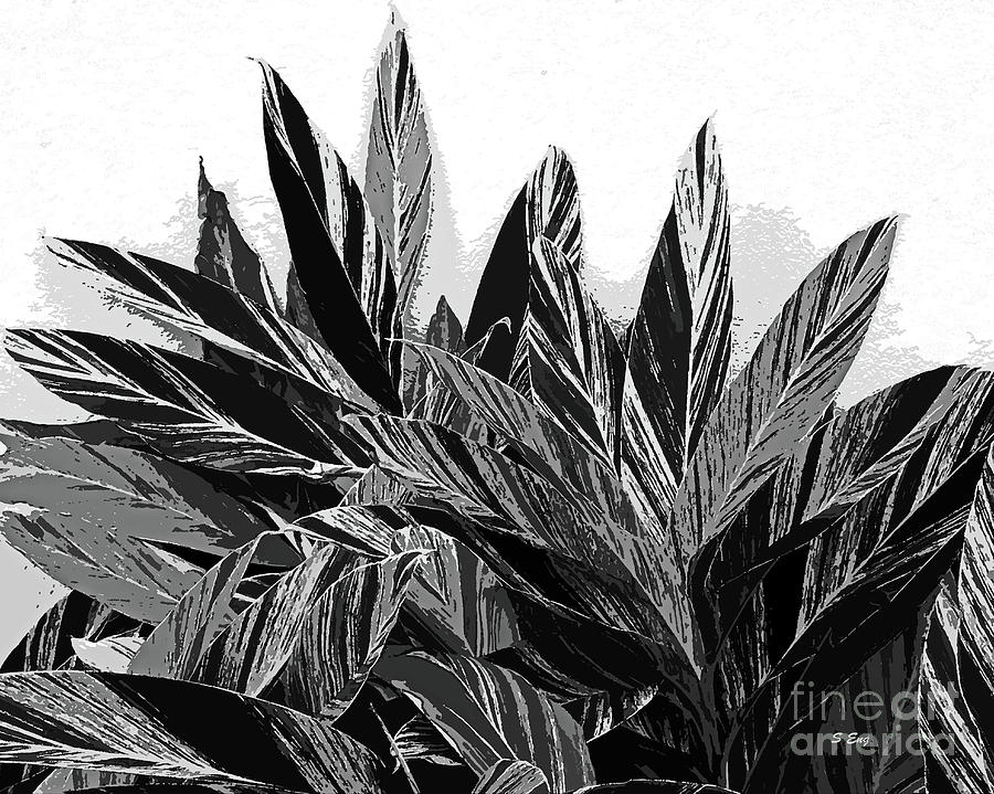Ginger Variegation Abstract Black and White 300 by Sharon Williams Eng