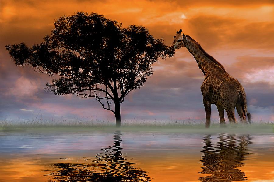 Giraffe At Sunset Photograph