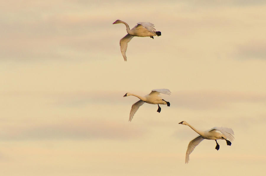 Gliding Among the Pastel Clouds by Beth Sawickie