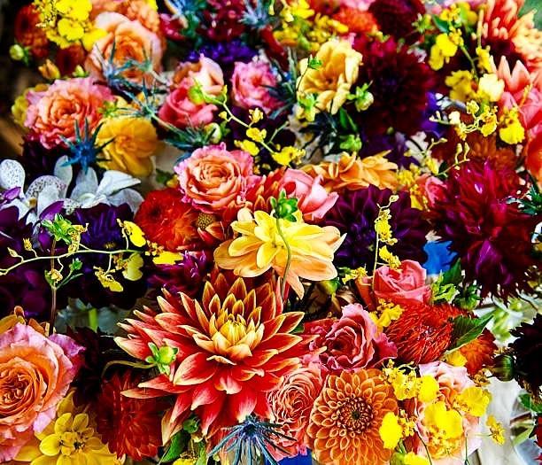 Glorious Floral Photograph