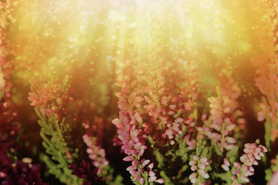 Glorious Light On Winter Flowers Mixed Media