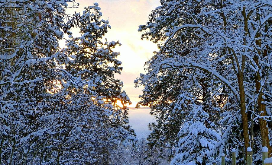 Glorious Winter Evening by Will Borden