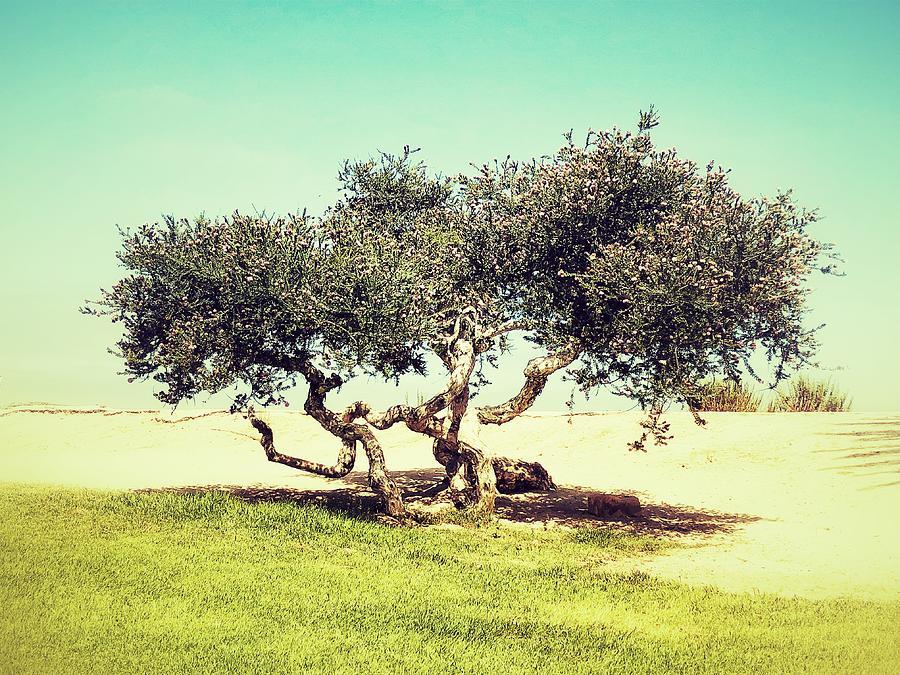 Gnarly Tree by Keith McGill