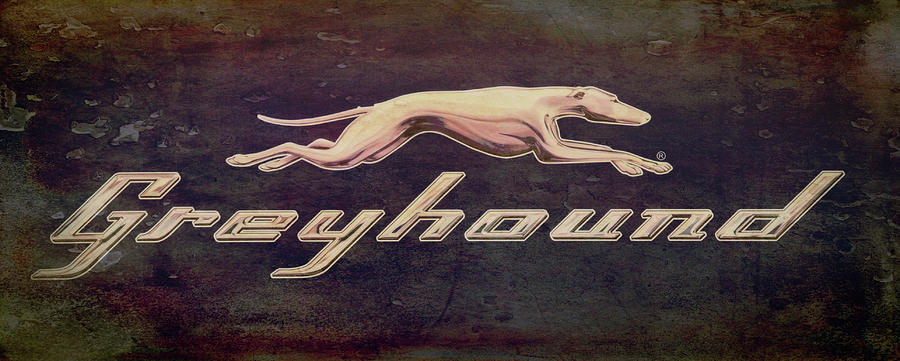 Greyhound Photograph - Go Greyhound by Jim Cook