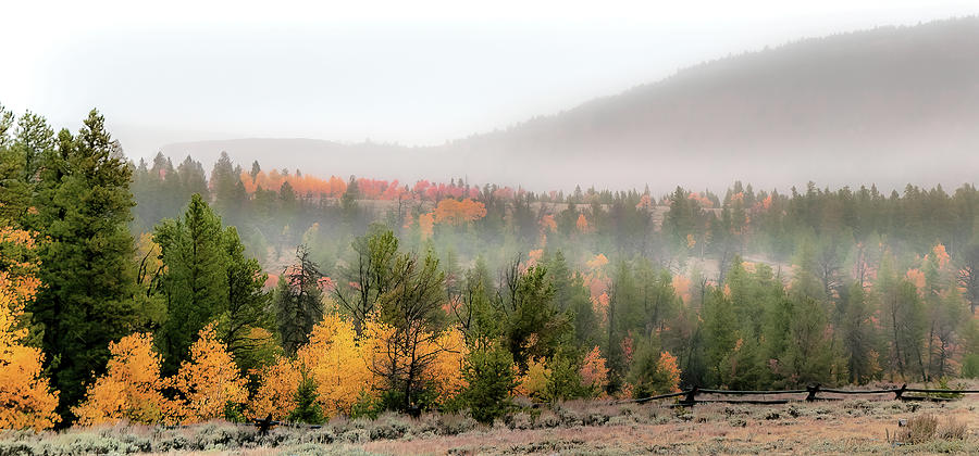 Fall Photograph - Gold at Miners Delight by Laura Terriere