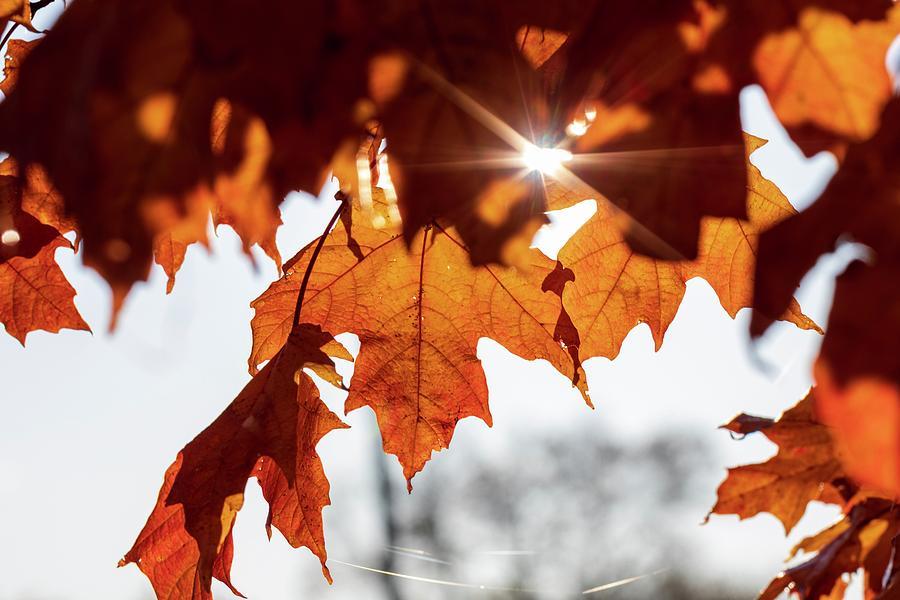 Gold Shine by Terri Hart-Ellis