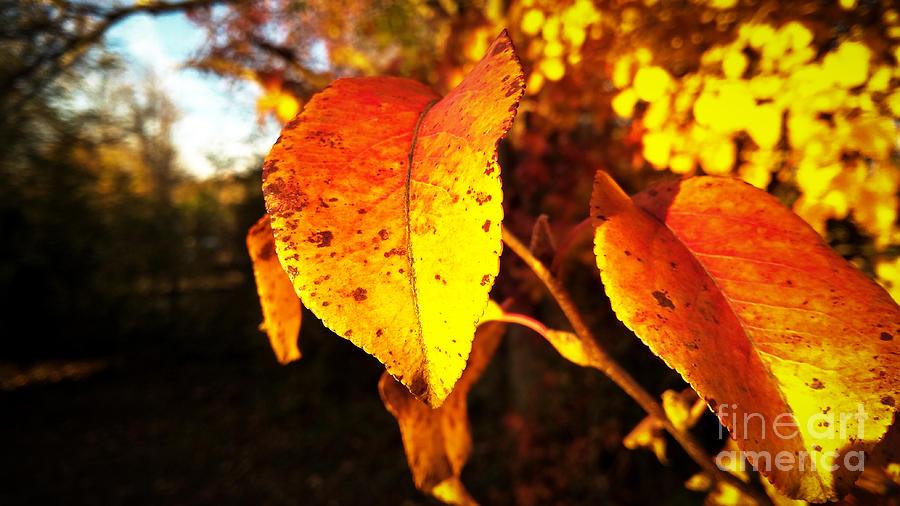 Golden Autumn by Robert Knight