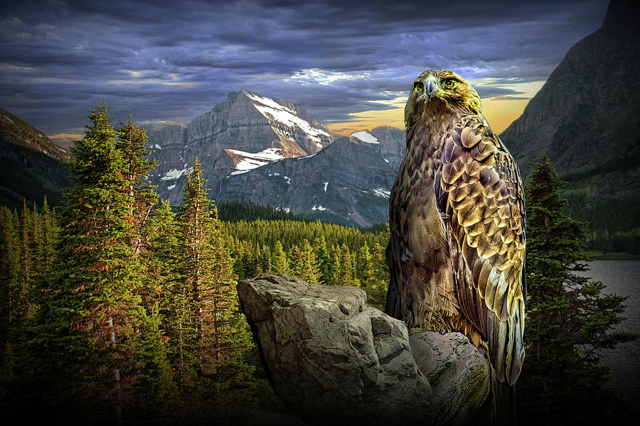 Golden Eagle In The Mountains Photograph