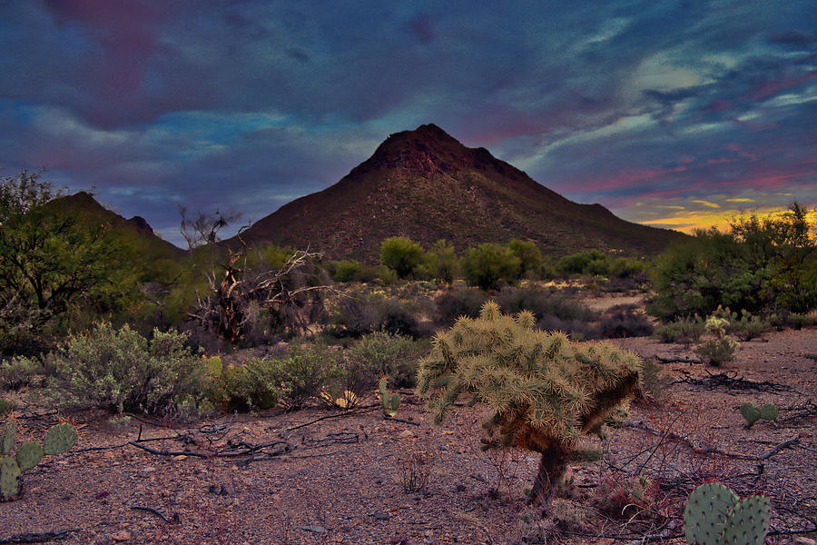 Golden Gate Mountain Cholla by Chance Kafka