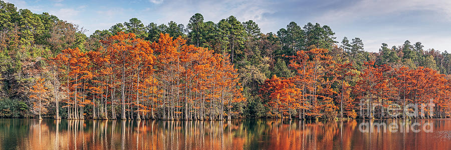 Golden Hour Panorama of Changing Bald Cypresses at Beaver's Bend State Park - Broken Bow Oklahoma by Silvio Ligutti