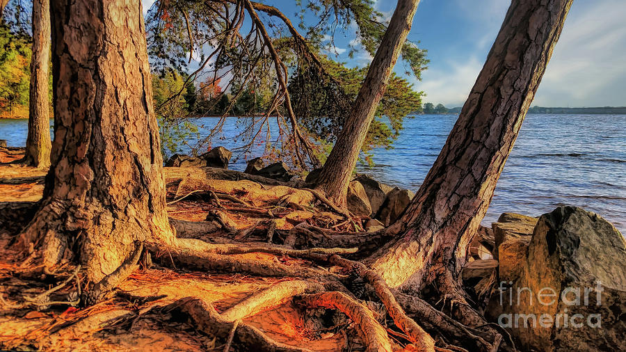 Golden Hour Trees at Lake Norman by Amy Dundon
