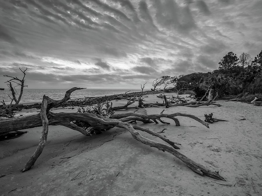 Golden Island - beautiful drift wood beach by Louis Dallara