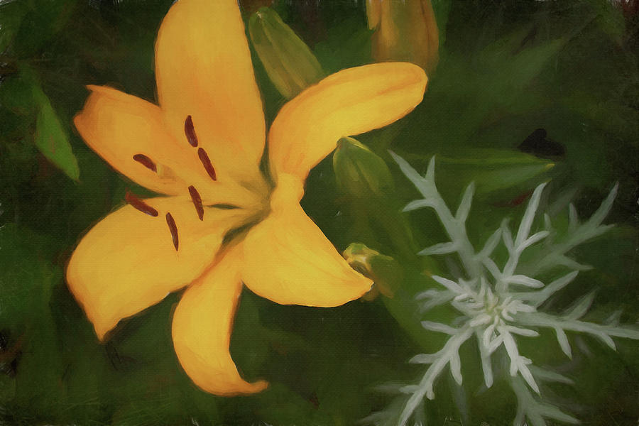 Golden Lily Photograph