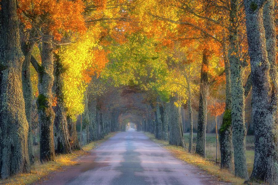 Golden Passageway Photograph