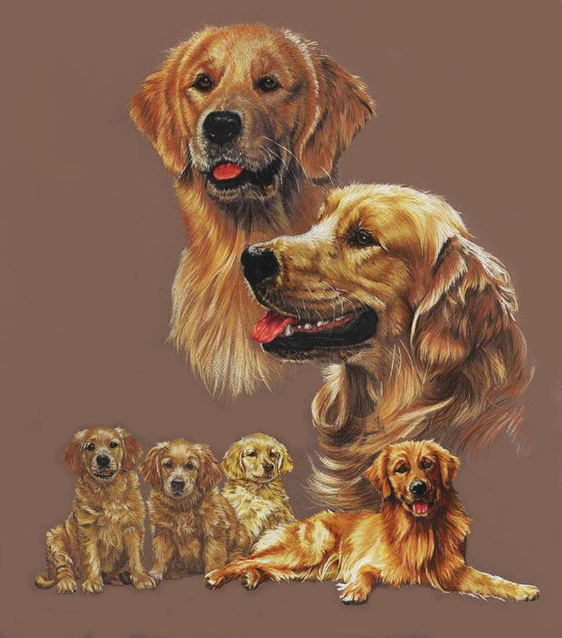 Golden Retriever Collage by Barbara Keith