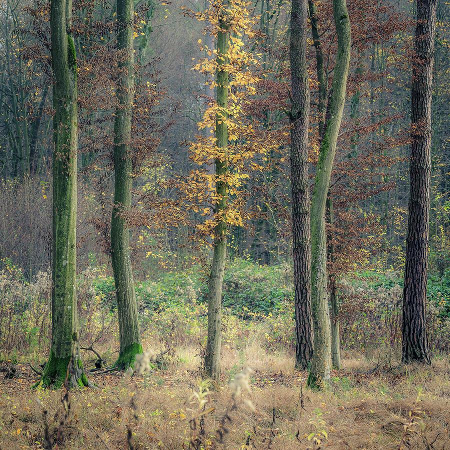 Golden season by Davorin Mance