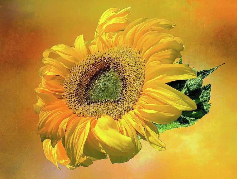 Golden Sunflower Photograph